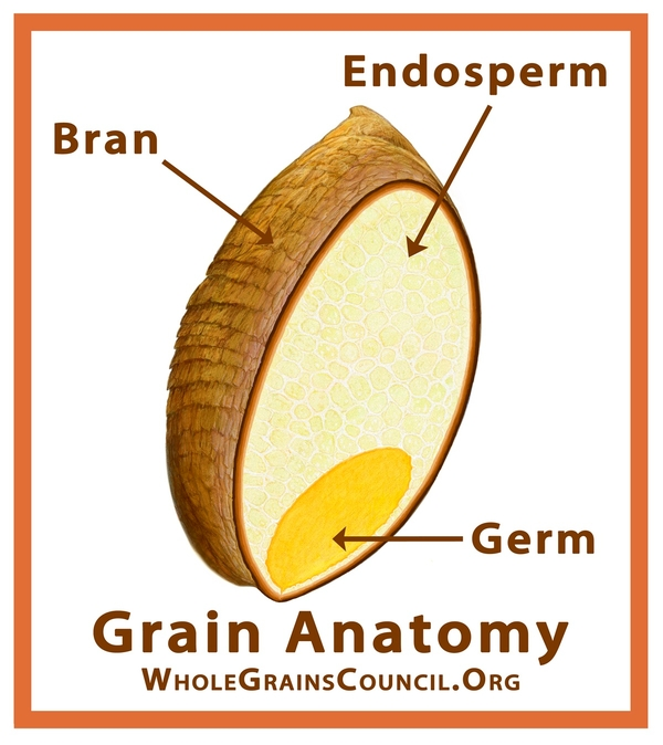 Wheat berry - bran, germ and endosperm.